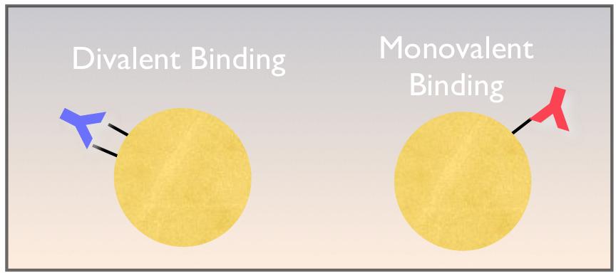 Divalent Binding