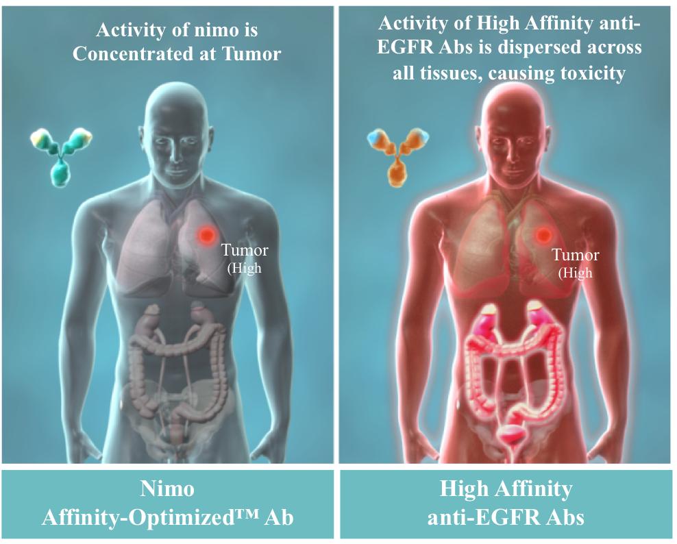 Nimo Affinity - Optimized